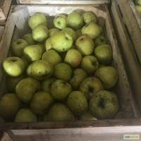 Яблука оптом від виробника, Хмельницький