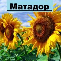 Насіннєва компанія «ГРАН» пропонує насіння соняшнику Матадор