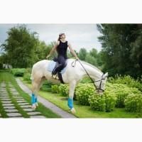 Продаю коня ториец изабелловой масти