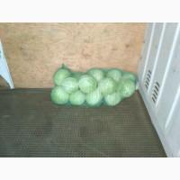 Продам капусту білокачанну, без болячок, товарний вид