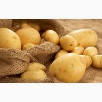 Покупаем семенной картофель с доставкой