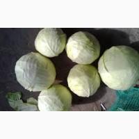 Продаж капусту