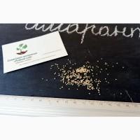 Амарант сорт Ультра семена 20 грамм (около 10 000 штук) насіння + инструкция + подарок