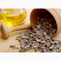 Куплю масличный полсолнух
