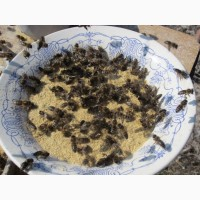 Мука соевая для весенней подкормки пчел, соеве борошно 1 кг