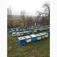 Продам бджолопакети 4р.р. в кількості 100 -150 шт