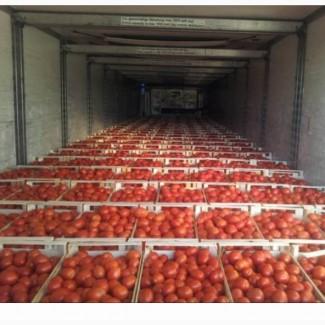 Продам помидор красный и розовый