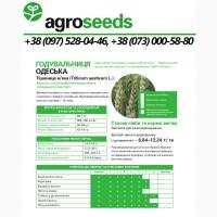 Насіння пшениці Годувальниця Одеська (1 репр) - Agroseeds / Agrotrade / Виробник