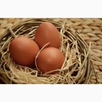 Яйця куряче