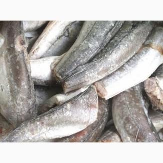 Свежемороженая рыба в ассортименте куплю