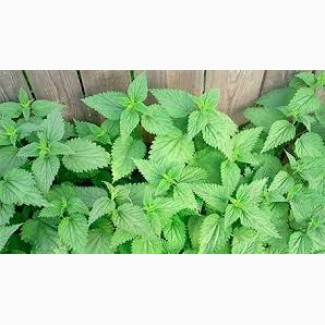 Крапива лист (измельченная 2-3 мм) 50 грамм
