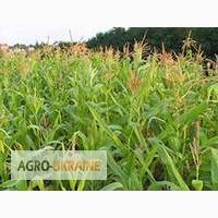 Семена кукурузы Мел 272 МВ