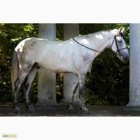 Продам шикарного коня