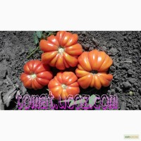 Семена помидоров, более 50 сортов урожайных томатов! Почтой вся Украина