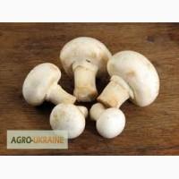 Куплю оптом грибы