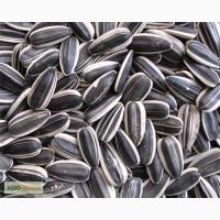 Гибриды, семена подсолнуха с высоким урожаем по доступной цене