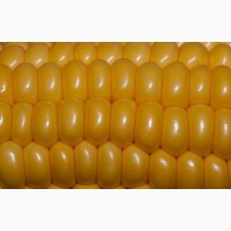 Купим Кукурузу.Урожай 2017