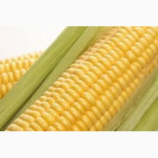 Закупка кукурузы.Крупный Опт