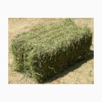 Продам сено тюкованое оптом!!! 22 грн с поля
