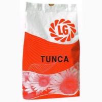 Продам семена подсолнечника Тунка