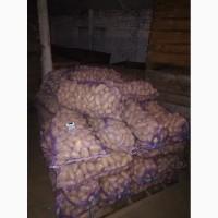 Продам товарный картофель, сорта гранада