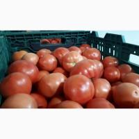 Продаём помидор различных сортов