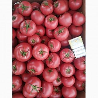Продаём помидор розовых сортов