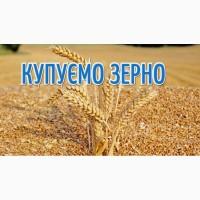 Закуповуємо пшеницю 2 кл, 3 кл, та фураж