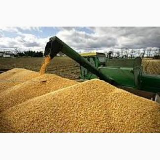 Купим кукурудзу та відходи різної якості