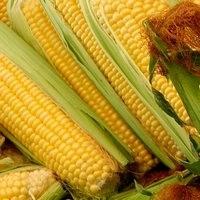 Кукуруза Моника семена