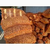 Реализуем грецкий орех в наличии есть объемы