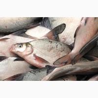 Рыба в широком ассортименте