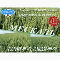 Насіння озимої пшениці Мескаль (Limagrain)
