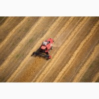 Мукомольный завод закупает пшеницу 2-3 класса