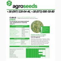 Насіння пшениці Кубус KWS (1 репр) - Agroseeds / Agrotrade / Виробник