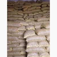 Продам на экспорт грецкий орех Выход ядра до 40%