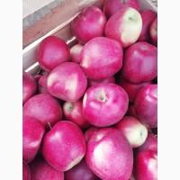 Яблука урожай 2020 із саду