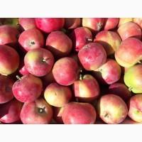 Реалізуємо яблука різних сортів