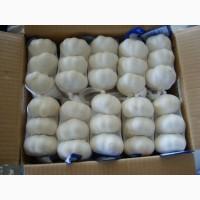 Garlic, Garlic, GARLIC. worlwide sales +4536992142