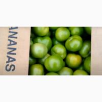 Продам помидор тепличный ( зелёный )