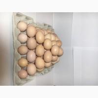 Продам Куриное Инкубационное Яйцо