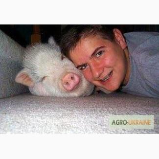 КомбиКорм Kоньяк с орехом для свиней и кур, которых кормят как человека