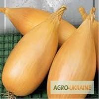 Продам весовые и пакетированные семена репчатого лука (оптом с первых рук)