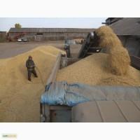 Куплю пшеницу.Вся Украина