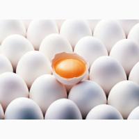 Яйцо куриное С0, С1, С2 в больших объемах