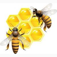 Куплю мед оптом без антибиотика Днепропетровская обл