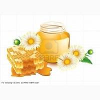 Покупаем мёд оптом