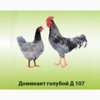 Инкубационное Яйцо Доминант Херсон. Инкубационные яйца кур Доминант