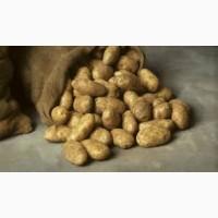 Продаем картофель оптом в больших количествах
