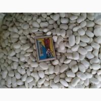 Продам насіння квасолі Файний Ясь